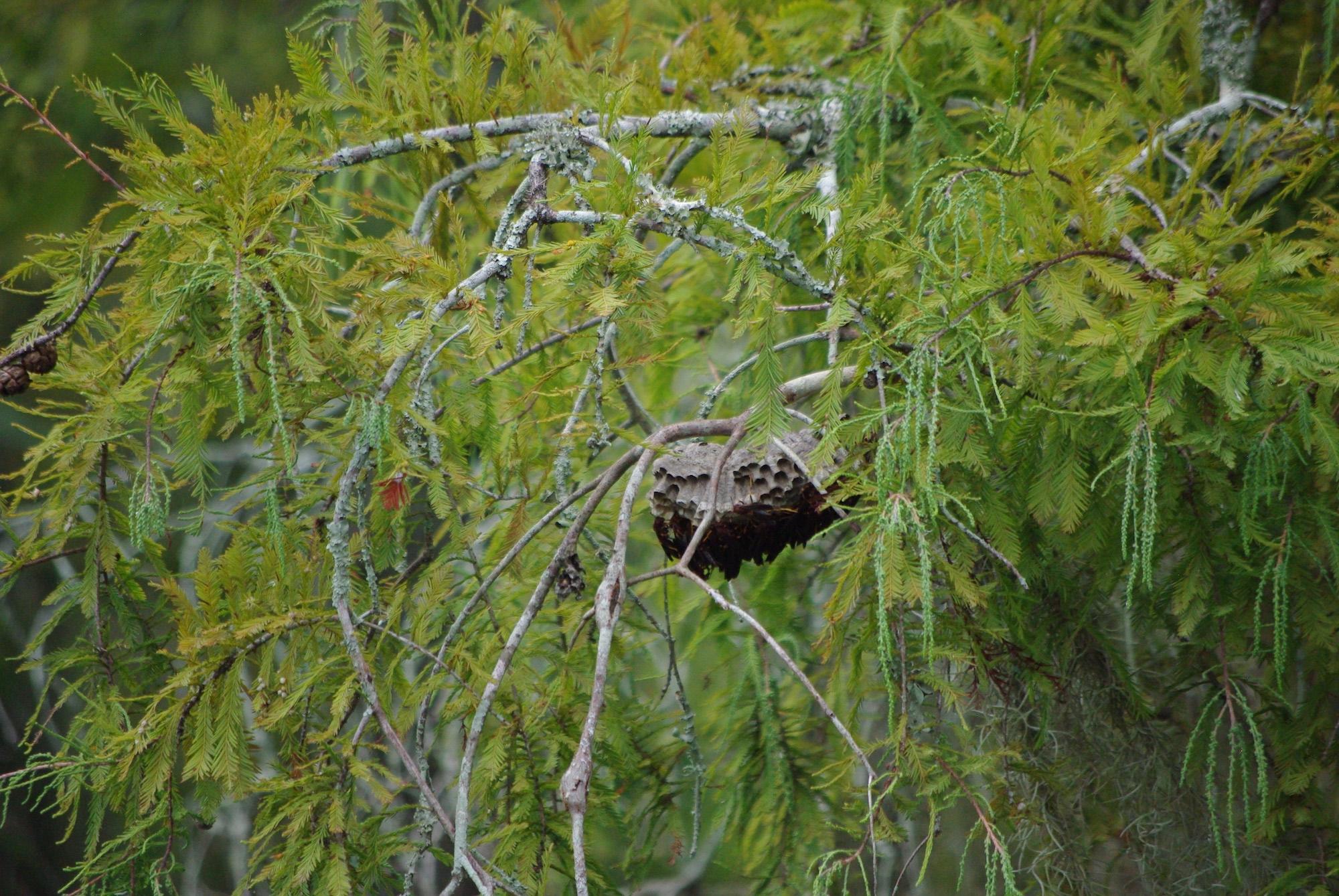 Un nid de guêpes