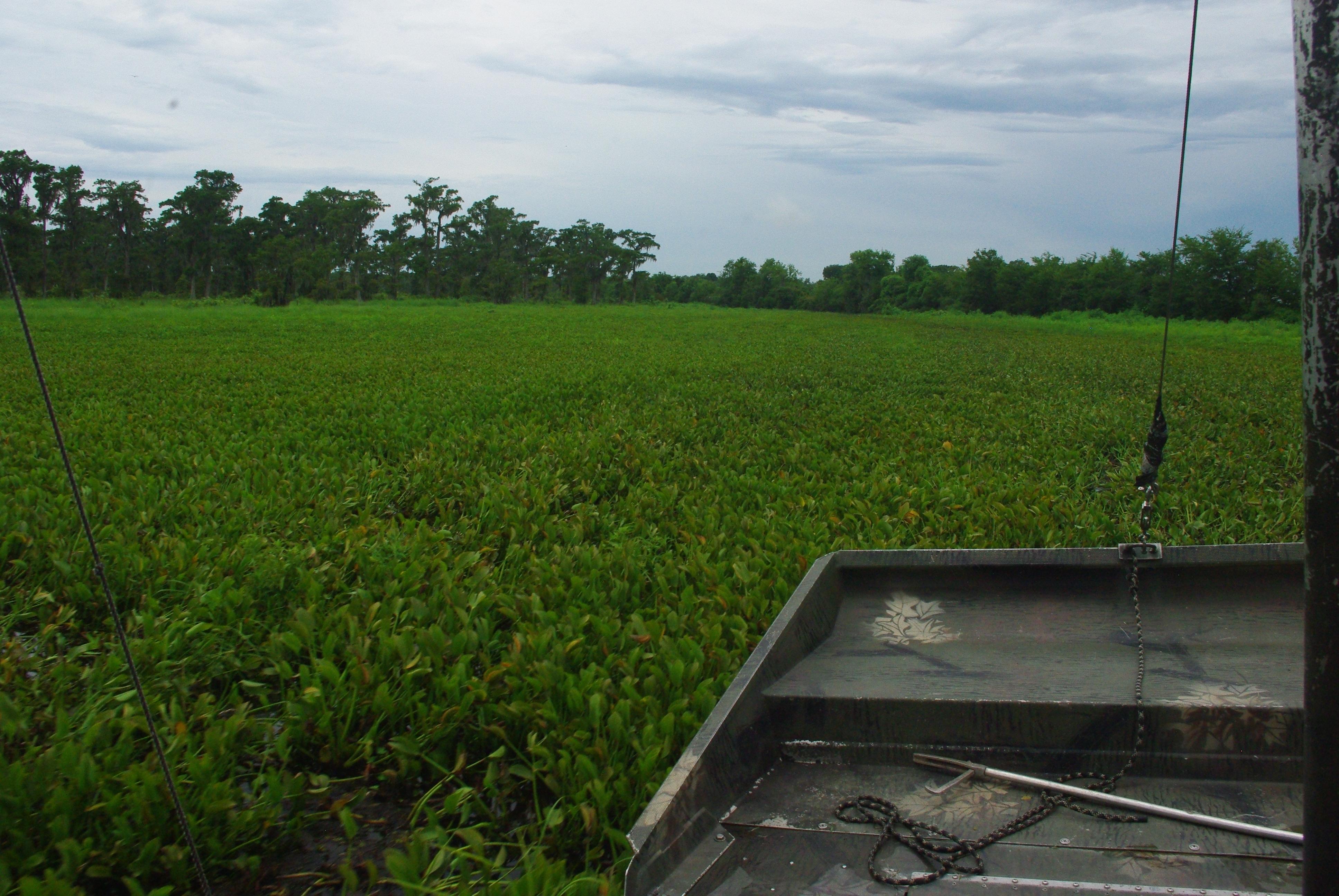 Beaucoup de végétation en surface