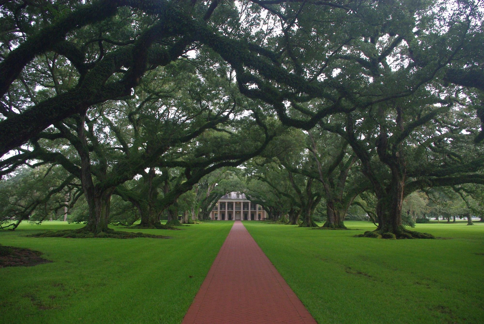 L'allée de chênes de la plantation en fin d'après midi